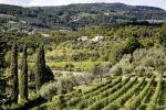 Boscaini, annata vino strana ma qualità in generale buona