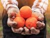 Aumenta la richiesta di arance spagnole, Confagricoltura Catania: