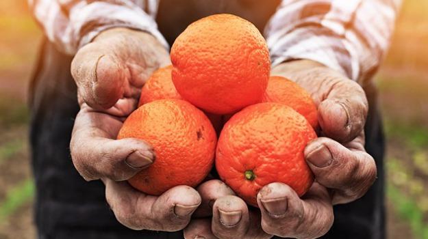 arance di sicilia, confagricoltura catania, Catania, Economia