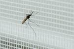 Italia importa in media 637 casi di malaria l'anno