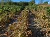 Clima: nel 2030-40 reddito aziende agricole fino a -13%