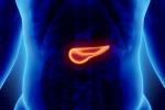 Cellule del pancreas iniziano a 'zoppicare' prima che malattia si manifesti
