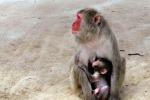Riconoscere i volti non è innato, vanno visti da neonati
