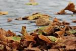 Addio estate, comincia l'autunno ma l'equinozio sarà domani: ecco perchè