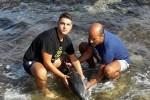 Gitanti salvano delfino spiaggiato - Le foto inviate alla pagina Fb di Gds