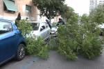 Albero caduto in via Boris Giuliano, danneggiate due auto - Video