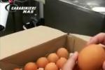 Uova contaminate, arriva protocollo autocontrollo