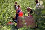 Cdm approva decreto su gestione rischi in agricoltura