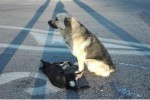 Il cane veglia per ore l'amico investito: le foto hanno commosso il web