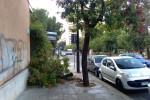 Nubifragio a Palermo, ecco i danni: alberi caduti e allagamenti - Video