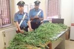 Coltivava canapa, a San Biagio Platani: arrestato