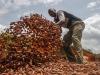Sesta estinzione massa minaccia riserve di cibo del globo