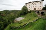 In Alto Adige vendemmia di una vite vecchia di 350 anni