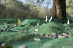 In Puglia siccità e grandine guastafeste per i raccolti