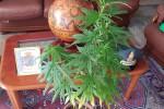 Droga, arrestato uno studente con 8 dosi di marijuana