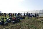 Scoperti 44 lavoratori in nero nelle campagne di Agrigento, Palermo e Trapani: 6 denunciati