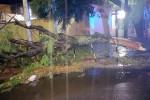 Nubifragio si abbatte su Palermo: alberi caduti e allagamenti in città. Danni anche ai vigneti di Monreale