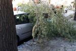 Un nubifragio si abbatte su Palermo Danni, alberi caduti, auto bloccate Decine di interventi dei vigili del fuoco