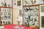 Mazara, si amplia il museo ornitologico