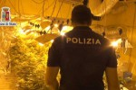 Piantagione di marijuana scoperta a Villafrati, un giovane in manette