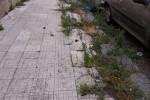 Rifiuti e degrado in un quartiere di Messina, la protesta di 4 consiglieri di Circoscrizione