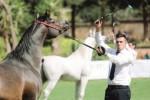 Al campo equestre di San Vito lo Capo sfilano splendidi cavalli arabi
