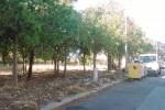 Trapani, ripulite le aree verdi della via De Santi