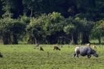 Fao, programma da 45 mln per stop a caccia fauna selvatica