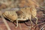 Coldiretti,da 1 gennaio insetti a tavola, no da 54% italiani