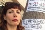 Elvira Dragonia Vernengo lancia un appello per l'albero di via Pipitone Federico