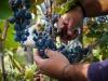 Filato del vino, tessuto con semi e bucce uva premiato da Ue