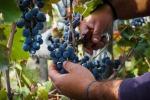 Vino: a Milano la prima festa delle cooperative vitivinicole