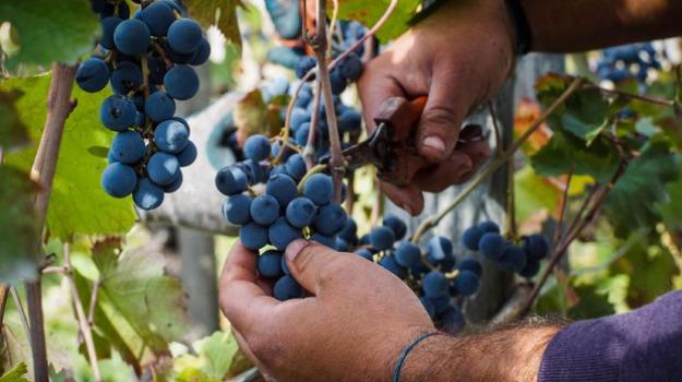 Filato del vino tessuto con semi e bucce uva premiato da ue