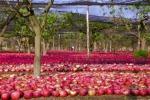 Coldiretti, cimice invade campi, è sos frutta e verdura