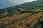Regione Veneto incrementa ettari per Prosecco Doc