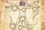 Nobel Medicina, come funziona il metronomo della vita