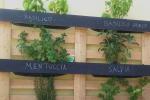 Detenuti di Volterra diventano agricoltori per cucina a km0