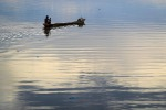Regione Veneto triplica fondi per filiera acquacoltura