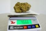 Tartufo bianco da 466 grammi trovato in Molise