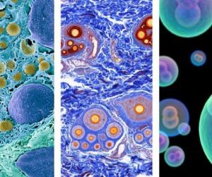 Tutte le cellule umane in un Atlante