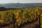 Vino bianco Gavi docg chiede alleanza a 'rossi' di Ovada