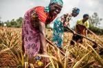 G7 agricoltura: Martina, in 500 mln fuori dalla fame entro il 2030