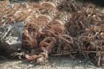 Bruciano un quintale di cavi di rame sulla spiaggia, un arresto e una denuncia a Messina