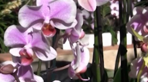 Piante da tutto il mondo in mostra all'Orto Botanico di Palermo: laboratori e incontri