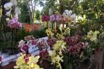 Zagara d'autunno, weekend a Palermo tra vivai e laboratori di giardinaggio