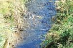 Frantoi al lavoro, nei fiumi agrigentini tracce d'inquinamento