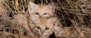 Malfa, un'anziana dona un terreno per realizzare un'oasi per gatti
