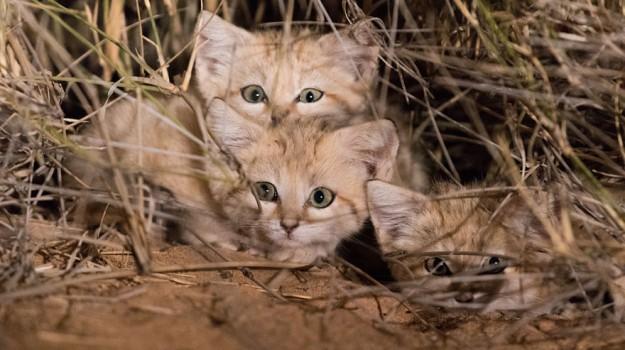 donazione, malfa, oasi per gatti, Messina, Cronaca