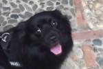 Cane abbandonato a Palermo diventa la mascotte della questura: la storia di Matisse