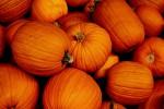 Piacciono le zucche made in Italy, volano le esportazioni: per Halloween aumento record del 16%